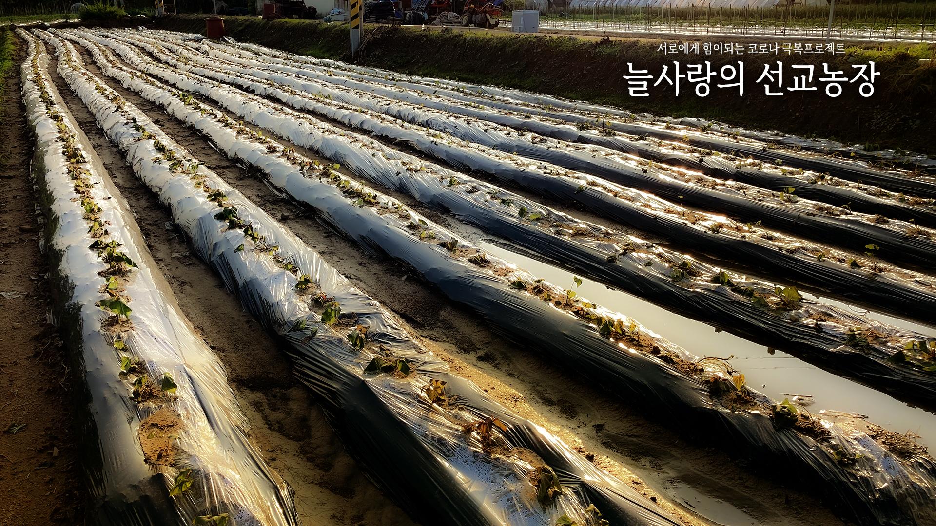 2021-10-03-고구마수확-000.jpg